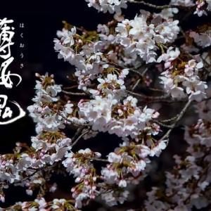 伊庭八郎 土方歳三 風間千景 感想|薄桜鬼 月影