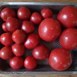 高菜チャーハン弁当とトマトの季節