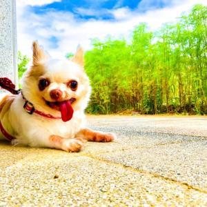 愛犬とちょっとブラリとお出かけの際に役立つ便利なオススメグッズ10選