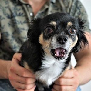 ズーノーシス(人獣共通感染症)に注意!簡単に愛犬から病気が移る