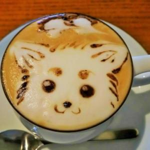チワワをドッグカフェに連れて行こう!京都のペット可レストラン