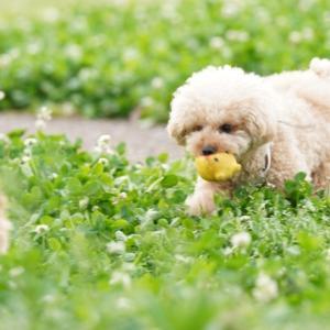 愛犬の老衰の特徴や症状は?何歳から老衰になるの?