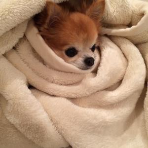 愛犬の心臓病に効果があるオススメの薬と注意すべき副作用