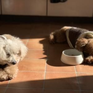 愛犬のオススメ便秘対処法!簡単な対策と効果がある食べ物とフード