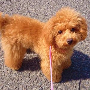 犬が膵炎になる注意すべき原因と急性膵炎と慢性膵炎の症状