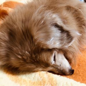 犬の膵炎の診断方法や予防法と治療法!役立つ治療薬は?