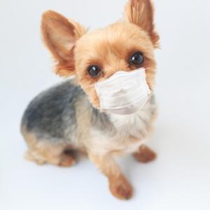 犬も見事に花粉症にかかる!原因や主な症状と予防法&治療法