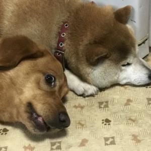犬が腸閉塞になる主な原因と現れる気になる症状