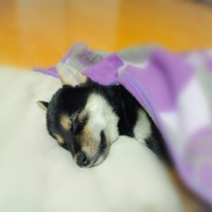 犬の腸閉塞の予防策や起こった場合の応急処置と検査法と治療法