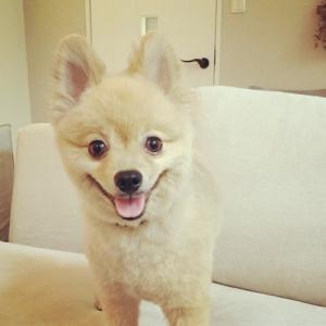 犬の角膜炎の予防法や治療法!おすすめの点眼薬と手術費用