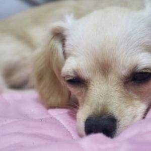 犬の急性胃腸炎と慢性胃腸炎と出血性胃腸炎のそれぞれの原因と症状