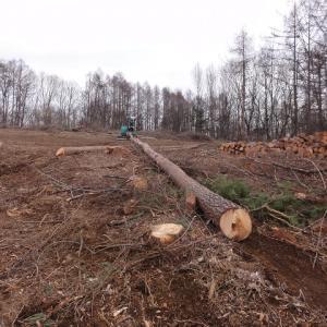 伐採後は引き上げる