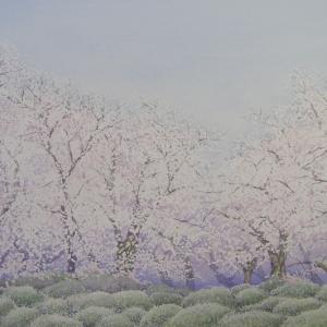 先日までの華やかな桜が・・・