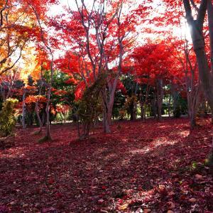 北海道旅行の旅~2日目は札幌・小樽(昼)