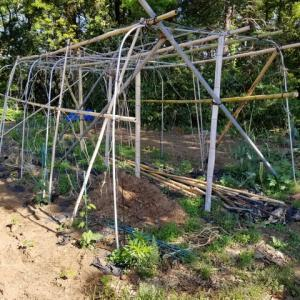 ゴ―ヤの空中栽培とその回りの野菜