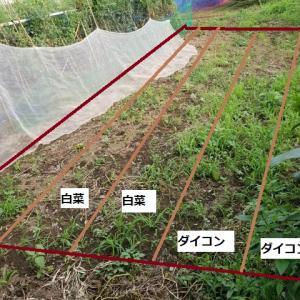 秋作の畝立て計画
