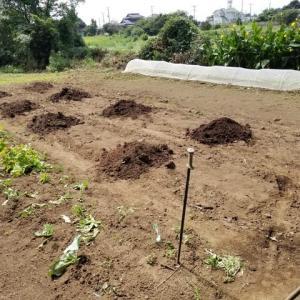 堆肥を撒いて、畝立てをした。