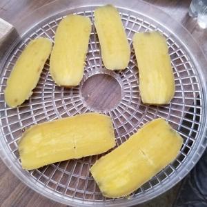 干し芋作り