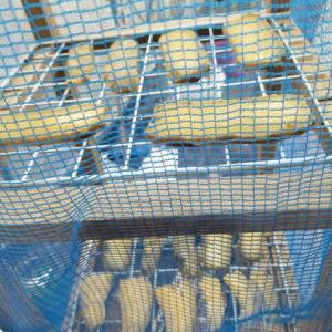 干し芋作り たまきちゃんの干し芋作り秘伝