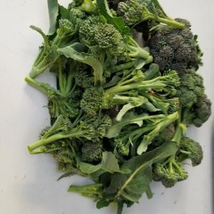 野菜の収穫   茎ブロッコリー、ほうれん草、沢庵