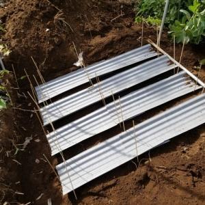 牛蒡の2段立体栽培の準備