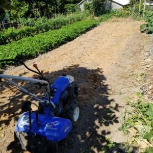馬糞堆肥を撒いた所を耕した。