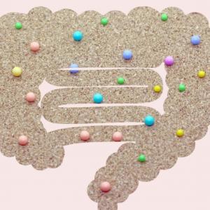 ホルモンと腸内細菌