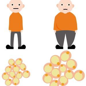 脂肪燃焼を支える必須成分、カルニチン