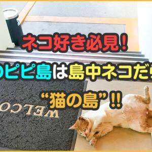 """ネコ好き必見!タイのピピ島は島中ネコだらけの""""猫の島""""!【画像あり】"""