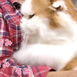念願のお膝猫記念日♪