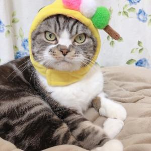 3色団子のお帽子で♪&ねこ自慢さんからのお知らせ♪