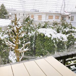 本当に雪でした&愛用中の除菌スプレー♪