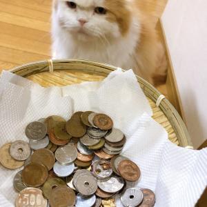 ねこに小銭♪れおくん秘密の模様♪