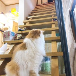 階段で追いかけっこ?ではなかった♪