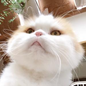 お誕生日の猫缶は??