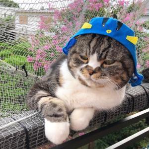 猫さんの健康体重の目安は♪