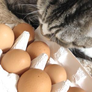 今年も買いました大寒の卵♪