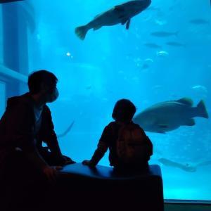 【5歳・3歳とお出かけ】入館人数制限でゆっくりと観れる「海遊館」