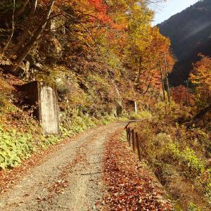 双六細越林道(金木戸林道)【その9】 ~20号隧道先まで