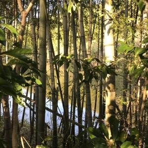 2020年最初の狩猟でマガモ2羽ゲット!鴨が散った池はどれくらいで回復するの??