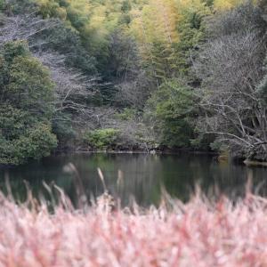 【令和2年度05】新年最初の狩猟は未開の地へ!初めて遭遇したオシドリの群れ!