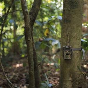 狩猟や防犯に!トレイルカメラの機能別おすすめ機種はこれ!