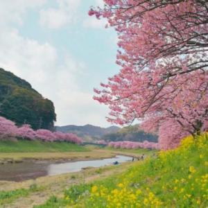 神子元島#013;欠航したので河津桜と菜の花のお花見してきた@青野川