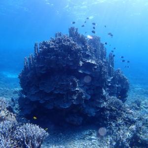 西表島#12;珊瑚ナイトとオガンとワイコン