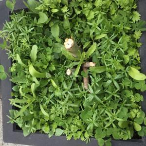 まるで、サラダのような花壇。