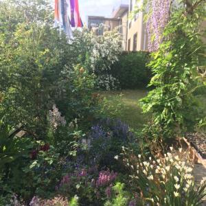 路地裏ガーデンエリアを増築。種まきしたガイラルディア、エキアセナ、朝顔、アイが発芽した!