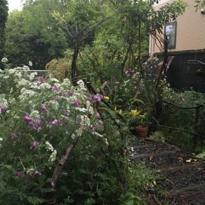 長雨のちの爺様ガーデン