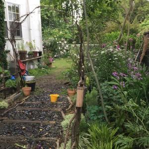 梅雨前の爺様ガーデンは、入れ替え、植え替え、模様替え。