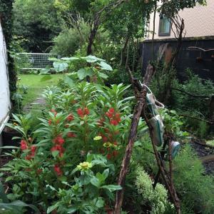 台風のような大雨の合間に。春蒔きの花達と種まきした苗達と。