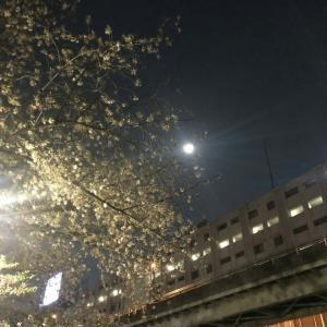 お月見とお花見!
